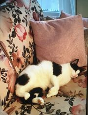 Kleine Katzendame sucht neues Zuhause