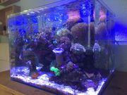 Meerwasser Aquarium komplett mit allen