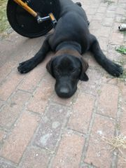 hund abzugeben 8 Monate alt