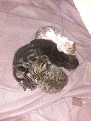 Kitten bereit zur Reserveriung