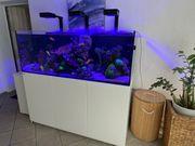 Meerwasseraquarium Red Sea Reefer 525