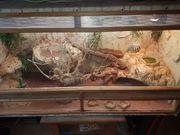 2Red Leatherback Bartagame Terrarium Zubehör