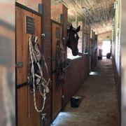 Pferdeboxen frei Stall frei
