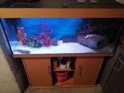 6 Axolotl mit Juwel Rio