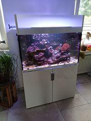 Meerwasseraquarium 300L komplett mit Besatz