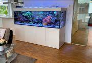 780-L - Traum Aquarium inkl Riffkeramik