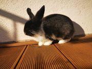Kaninchen abzugeben mit Beleuchtung