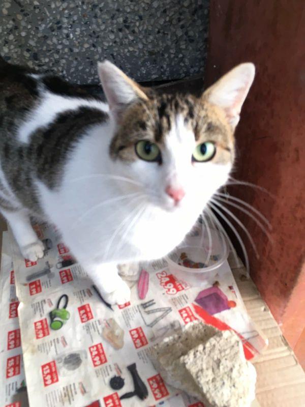 Liebe verschmuste Katze sucht Freigangplatz