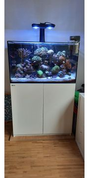 Meerwasser-Komplett-Aquarium mit Inhalt - 250l Red-Sea-Reefer -