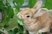 Biete Urlaubsbetreuung für Kaninchen und