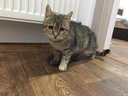 Tabby Katze aus dem Tierschutz