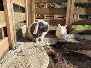 Süßes Kaninchenpaar