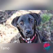 Tamo - Ein einzigartiger Blick
