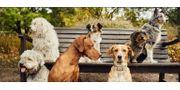 Hundetagesstätte Pension Pfoten Hort