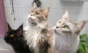 Katzenfriseur Katzenpflege Hirschaid Hundefriseur