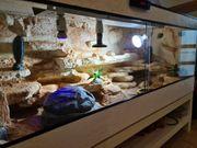 Terrarium komplett mit 2 Leopardengeckos