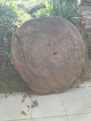 Baumscheibe vom Urwaldbaum