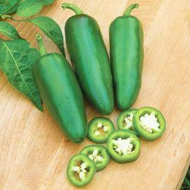 Pflanzen - Verkaufe Jalapenosamen grün