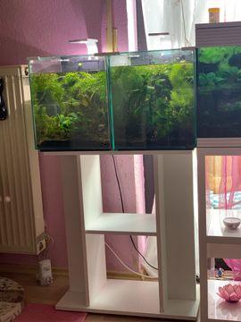 Bild 4 - 2 Aquarien mit Unterschrank Pflanzen - Wörth