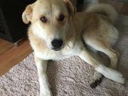 Traumhafter Hund such liebevolles Zuhause