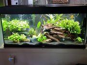 aquarium rio 180 led
