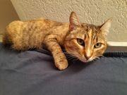 MAMI ein wunderschönes Katzenmädchen