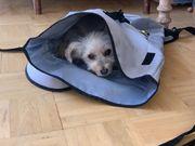 Hundebetreuer In