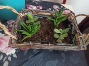 bepflanztes Körbchen