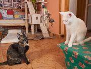 Katzen Cloe und Clarisa suchen