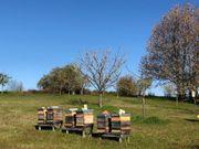 Bienenvölker auf Zadand Rahmen