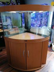Juwel Trigon 190 Eckaquarium Meerwasser