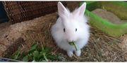 Junges weibliches Kaninchen