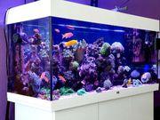 Meerwasser Aquarium nur komplett abzugeben