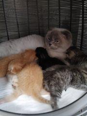 wundervolle Katzchen