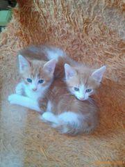Kitten bis 1 Jahr - Tierschutz