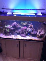 Aquarium 700 Liter