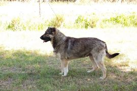Hunde - Taiga - 4 weiße Pfoten suchen