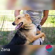 Zena - sportlich und anhängliche Schmusebacke