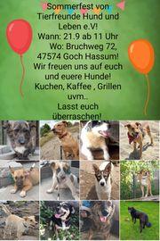 Sommerfest von Tierfreunde Hund und