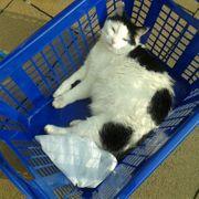 Katzenbetreuung in Langenfeld gesucht