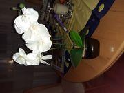 Orchidee im Topf weiß
