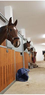 Pferdeboxen zu vermieten Neubau