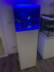 Meerwasser Aquarium dupla Marin 80l