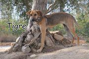 Tigre sucht nun eine Familie