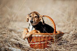 Schäderhund-Bracke Mix Funtik sucht Zuhause: Kleinanzeigen aus Augsburg Innenstadt - Rubrik Hunde