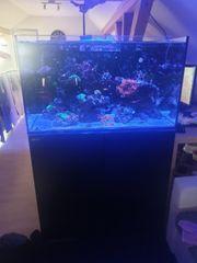 Red Sea Reefer 250 komplett