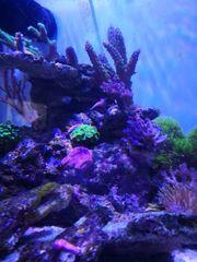 Dennerle 60l Nano Meerwasser Aquarium