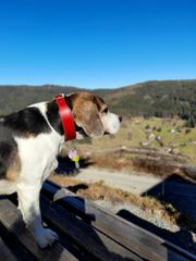 Hundebetreuung Hundesitting 72270 Baiersbronn