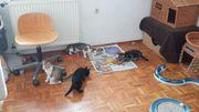 6 Kitten suchen neues liebevolles