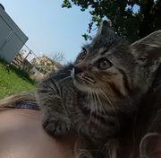 Katzen Katzenbaby Kitten Mieze